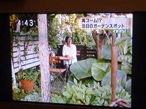 09-7-15htbichioshi2.jpg