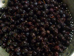10-3-6berry1.jpg