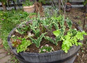 11-5-7k-garden1.jpg
