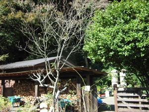 ishigama-g.t4.jpg