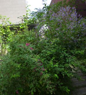 n-garden1.jpg
