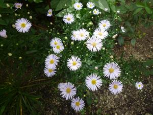 n-garden10.jpg