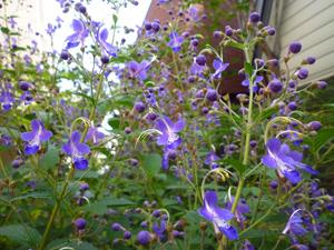 n-garden2.jpg