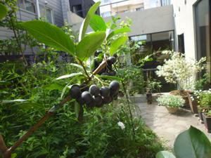 n-garden4.jpg