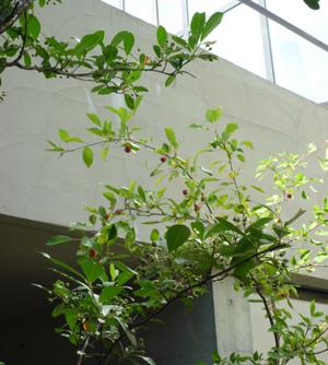 n-garden5.jpg