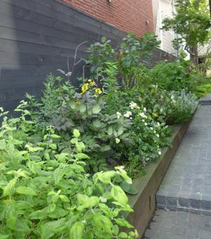 n-garden6.jpg