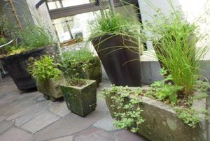 n-garden7.jpg