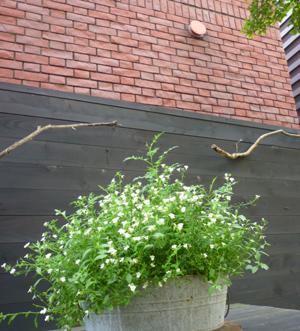 n-garden8.jpg