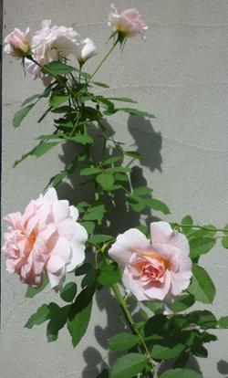 n-garden9.jpg