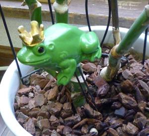 twitter-frog.jpg